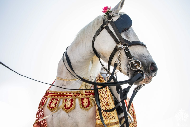 Groom's horse indian wedding
